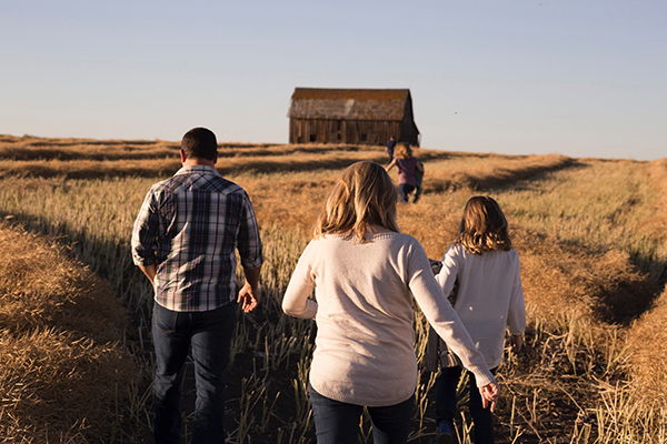 parents with their daughter walk through a field of golden wheat - towards an old brown barn on a sunny afternoon